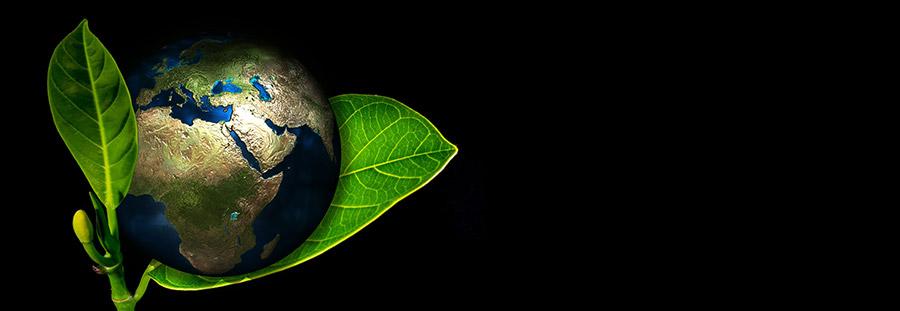Erde in einer Pflanze, Wiedergeburt der Erde